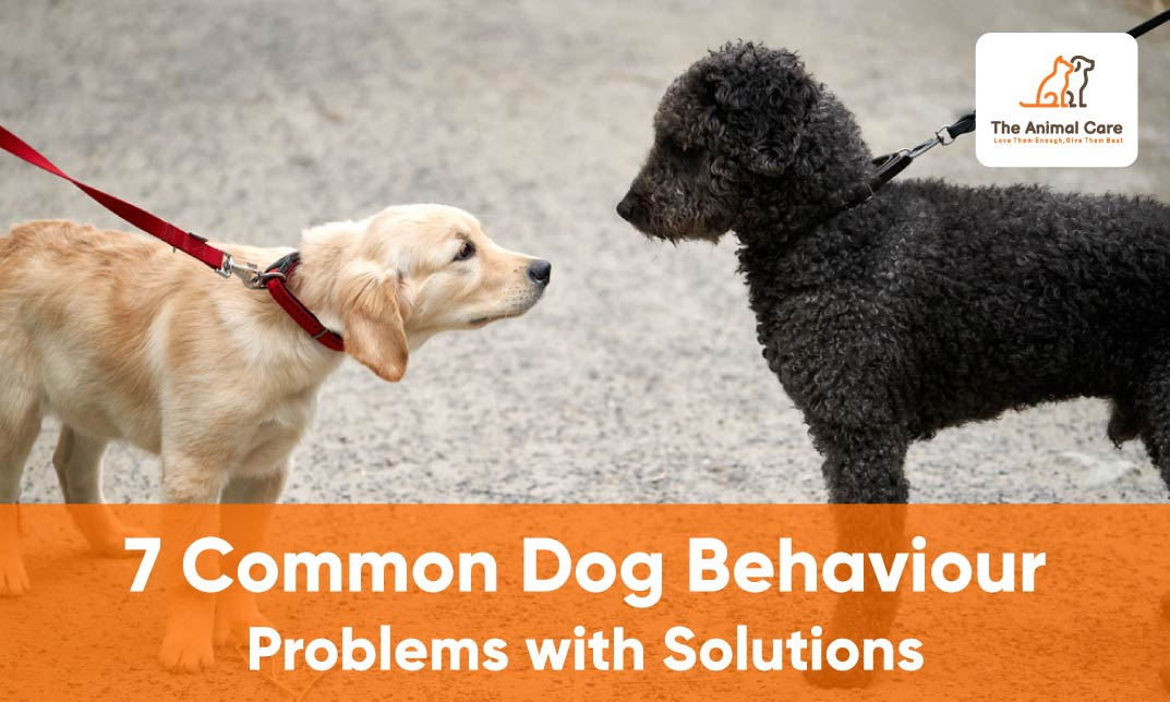 7 Common Dog Behaviour Problems with Solutions