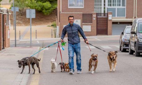 Pet Sitting and Dog Walking Business: Marketing Strategies