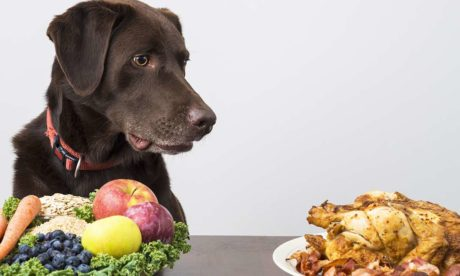 Switching Dog Diets